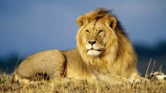 afrika len animales peligrosos mundo lista de los animales