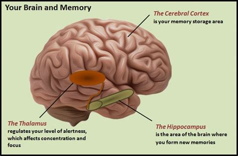 memory your brain the complete guide on how to improve your memory think faster concentrate more and remember everything books brain and memory