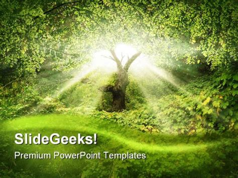 templates for powerpoint free download nature sunlight in forest nature powerpoint template 0910