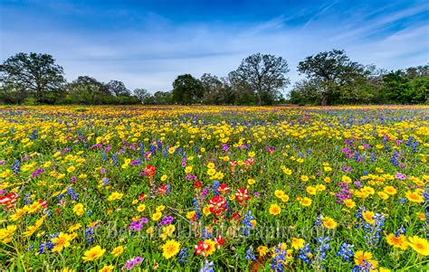 Most Beautiful Home Interiors field of colorful wildflowers bee creek photography