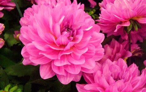 imagenes rosas sangrando confira a lista das flores mais lindas do mundo