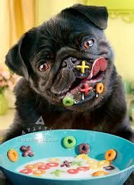 pugs how much do they cost pugpugpug pug tips