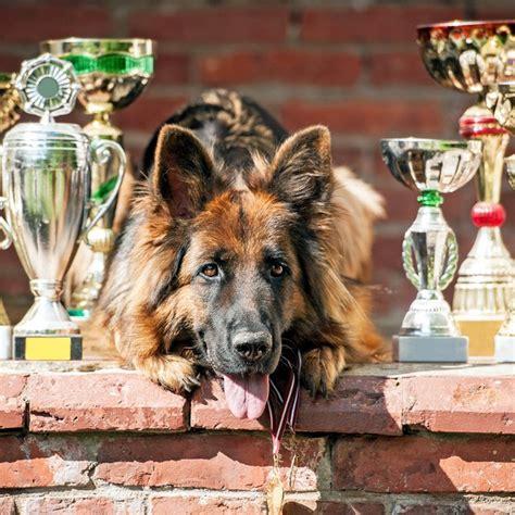 do dogs their name where do show competitors get their names