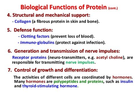 protein 4 functions introduction to food proteins