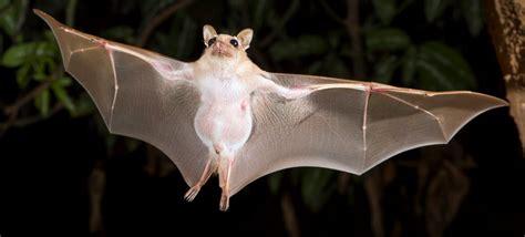 bat in bedroom while sleeping bat in bedroom while sleeping bedroom and bed reviews