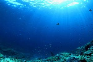 these amazing marine biology facts will make you go wow
