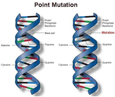 Imágenes Means In English | adl15mutation peiran s blog