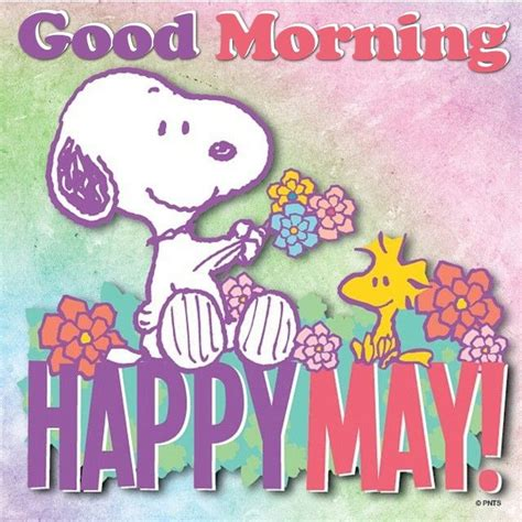 happy may day cards www pixshark com images galleries good morning happy may pictures photos and images for