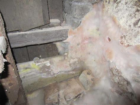 schimmel im mauerwerk bekämpfen schimmel im keller schimmel gutachten dusche im keller