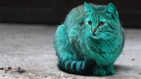 Green Cat the mystery of bulgaria s green cat getty images tv
