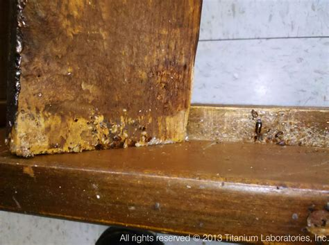 Bed Bugs In Bed Frame Bed Bugs Bed Frame