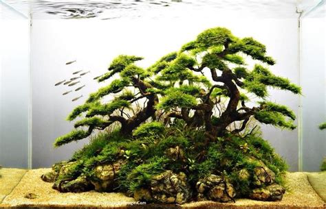 aquascape tree driftwood and java moss faux bonsai aquaria and