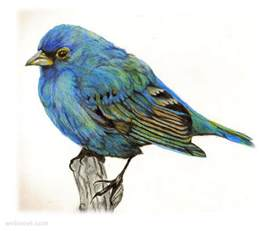 color bird 30 beautiful bird drawings and works for your inspiration