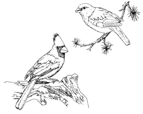 Tpwd Kids Cardinal And Painted Bunting Cardinal Bird Coloring Page