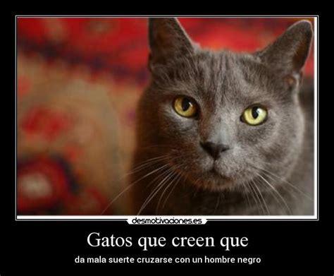 imagenes gatos tristes gatos frases tristes