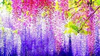 Lilly Pulitzer Bedroom 110 Amazing Hd Wallpapers Of Beautiful Flowers Androidguys