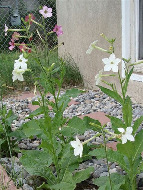 what to plant in fall garden