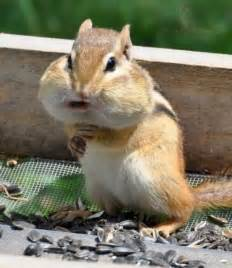 gallery for gt squirrels with nuts