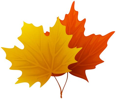 fall leaves clipart maple leaves clipart clipground