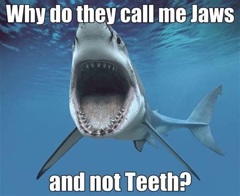 Funny Shark Meme - shark meme jaws sharks scuba diving shark week