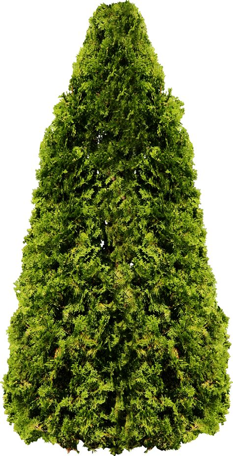 trees photo tree png image free picture