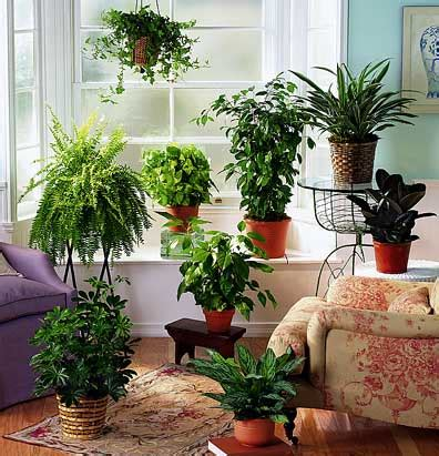 Plants Decoration At Home by Potted Plants Clean And Pollution Free Homes