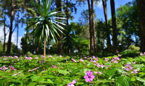 Plants of Mauritius: a Tour of SSR Botanical Garden   MK Blog