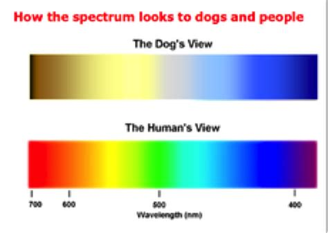 Color Blindness In Humans Are Dogs Really Color Blind Siowfa14 Science In Our
