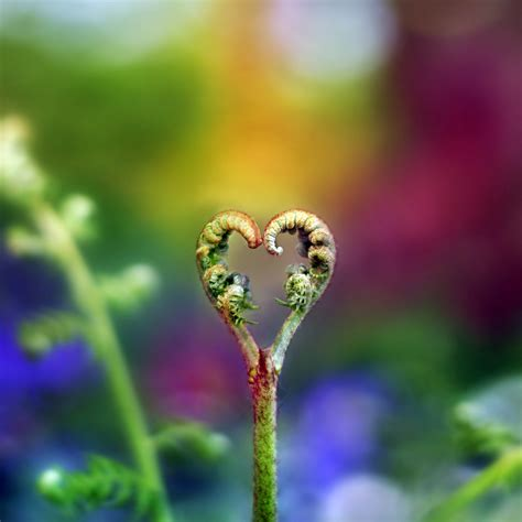 images of love nature image of nature love pictures of nnature