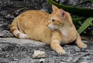 cat on cancun mexico david kamm photoworks