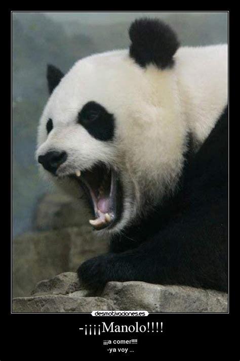 Memes De Pandas - angry panda memes