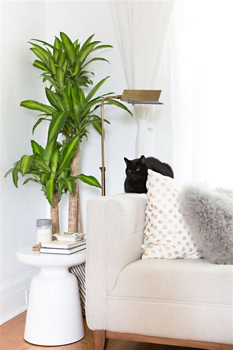 large indoor plants 17 chic renter hacks that make a