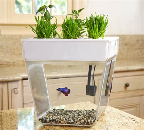 fish tank bench best 25 aqua farm ideas on pinterest fish tank price