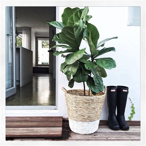 dipped planter basket styled  mon palmer kmart home