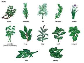 chives noun definition pictures pronunciation and