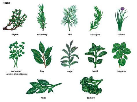 plant 1 noun definition pictures pronunciation and sage 1 noun definition pictures pronunciation and