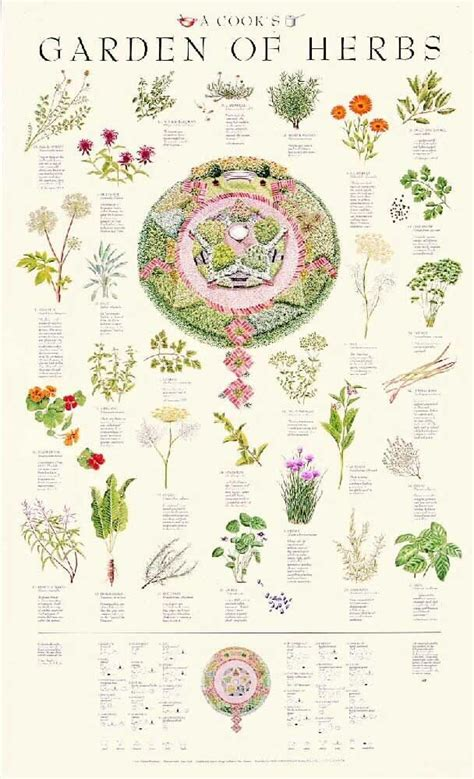 types of garden herbs posters a cook s garden of herbs poster i own it and now