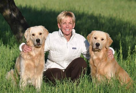 golden retriever sizes golden retriever size assistedlivingcares