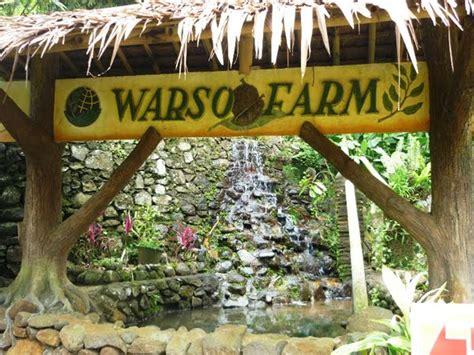 menikmati durian  warso farm kota bogor