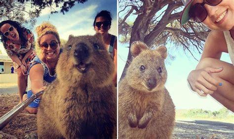 Quokka selfies are new tourist trend in Australia   Life ...