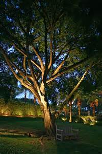 light on landscape outdoor lighting trees home decoration club