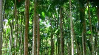Plants Of Tropical Rainforest Biome - tropical rainforest plants wallpaper