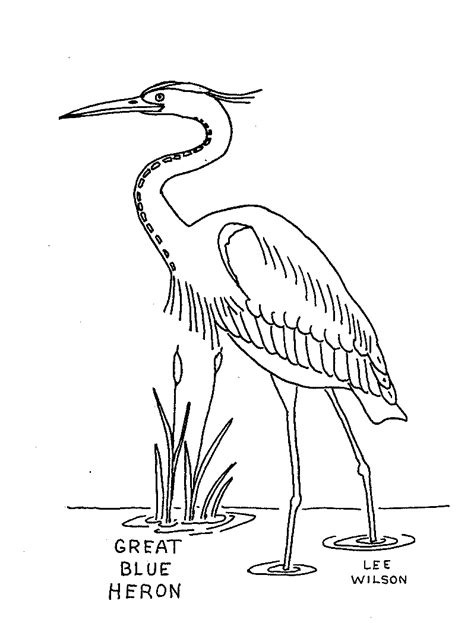 coloring book how great free great blue heron coloring pages