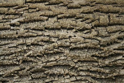 local pattern texture 50 high resolution free wood textures flashuser