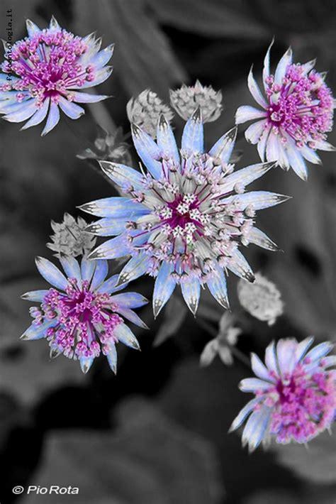 nomi fiori di montagna fiori di montagna
