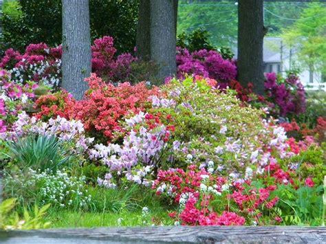 lavori in giardino lavori mese giardino maggio lavori mese giardino
