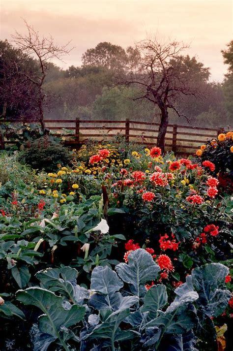 autumn garden kale datura dahlias fence sky