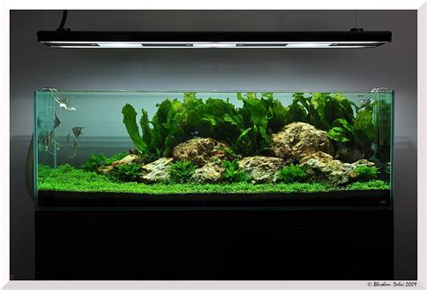 aquascape piranha pics collection of truly inspired aquascape kinds of
