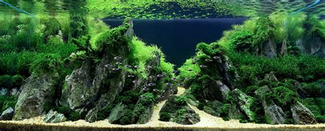takashi amano aquascaping iguwami aquarium the simple aquascape aquariuminfo org