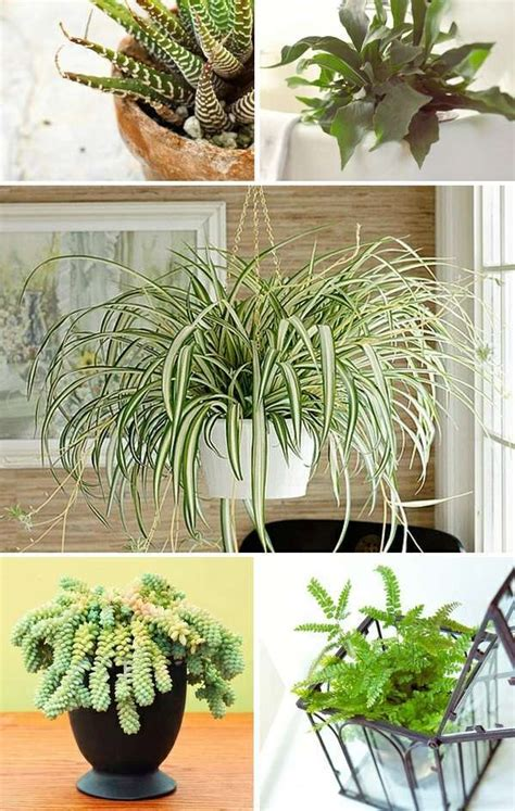 indoor plants   light interior design